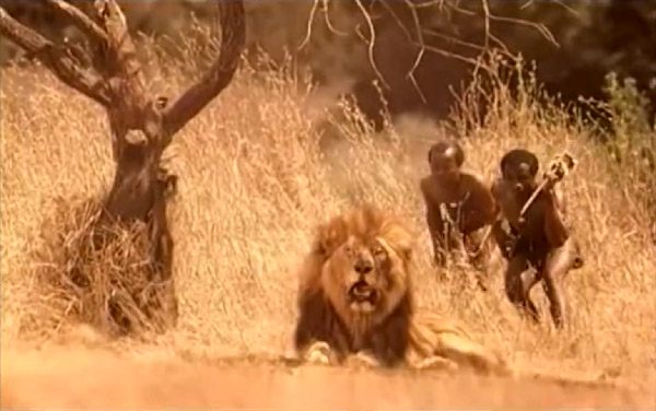Rogaine: Lion